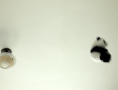 Pandaflight3